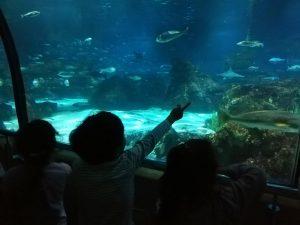 """""""La classe dels pingüins, a l'Aquàrium"""""""